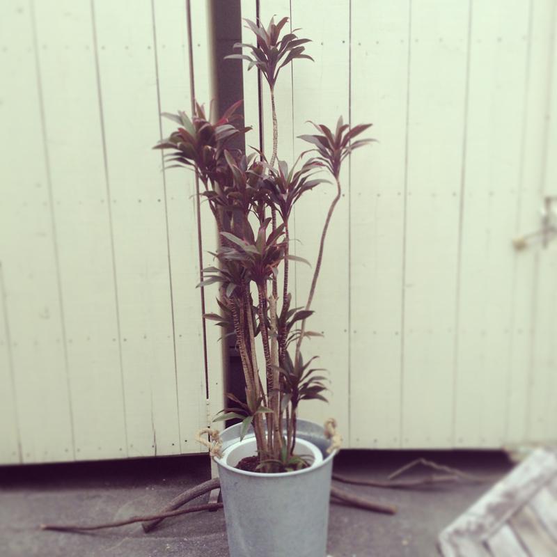 観葉植物02